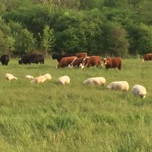 Great Northern Farm