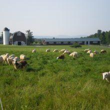 Meadowood Farms