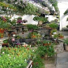 Debrucque Greenhouses, LLC