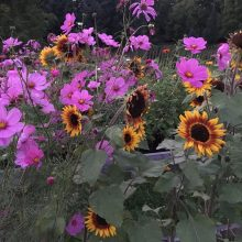 Foothills Flower Farm