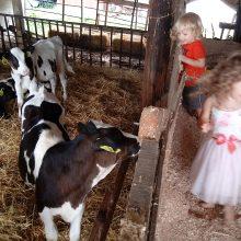 Durfee's Stand at Tuscarora Dairy