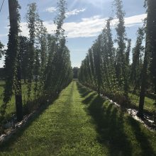 3 Brothers Hops