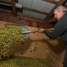 Foothill Hops Farm and Farm Brewery
